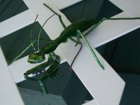 Praying Mantis feature Image